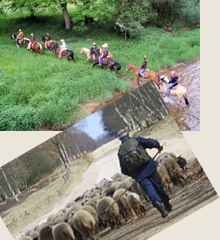 paardrijden arrangement in Eifel